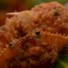Ketam Isi Makanan Khas Belitung
